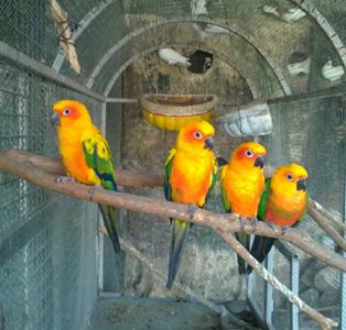 """نقش موثر """"باغ پرندگان"""" در جذب گردشگران"""