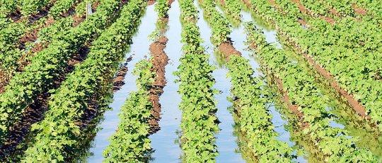 خمام - کمبود 500 میلیون متر مکعب آب کشاورزی