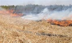 سوزاندن کاه و کلش برنج تخلف است