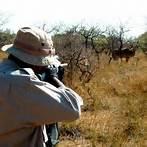 ممنوعیت شکار پرندگان در گیلان