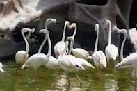 خمام - 9 قطعه پرندهی آبزی از نوع پاشلک و آبجلیک خریداری و آزاد شدند