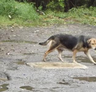 خمام - به روایت تصویر: سگهای ولگرد