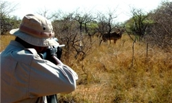 صدور مجوز شکار پرندگان آبزی