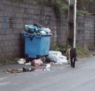 طرح جمعآوری سگهای ولگرد از سطح شهر تا چهزمانی متوقف میماند ؟!