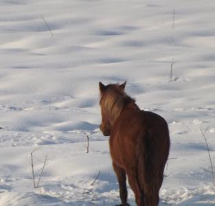 اسبها در یک روز برفی