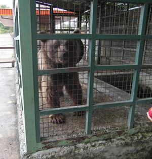 خمام - خرید و فروش خرس در باغ پرندگان