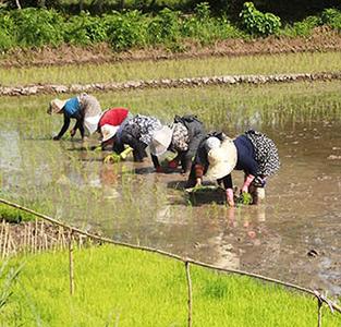 کشاورزی در مزارع بخش خمام