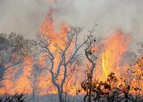 آتشسوزی جنگلهای مرزی بخش خمام و منطقهی آزاد انزلی مهار نشده است