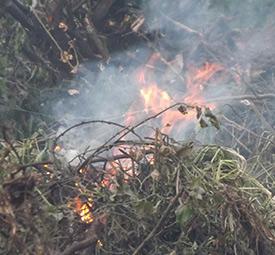 خمام - تلاشها برای خاموش کردن حریق جنگلهای مرزی خمام و منطقه آزاد انزلی ادامه دارد