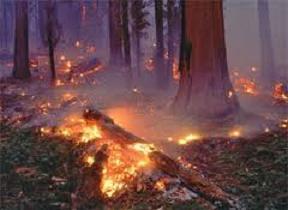 برخی آتش سوزیهای جنگل به دلیل نبود مسیر دسترسی به طول انجامید