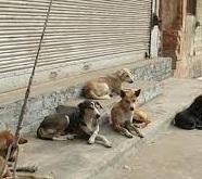حملهی سگهای ولگرد به دانشآموزان