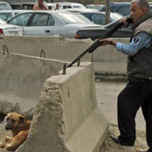 تیراندازی به سگهای ولگرد در روز روشن / سگهای زخمی به حال خود رها شدند