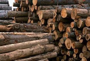 کشف 120 اصله چوب قاچاق در خمام