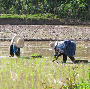خمام - کشاورزی در مزارع بخش خمام