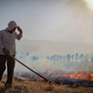 حبس یکساله در انتظار سوزانندگان کاه و کلش