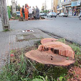 بازهم بریدن درختان به بهانهی تعریض!