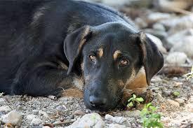 سگهای ولگرد و بیسرپرست جمعآوری میشوند