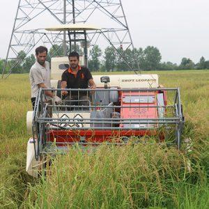 خمام - آغاز برداشت برنج از شالیزارهای بخش خمام