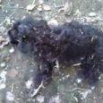 وضعیت نگران کننده حیوانات در روستای زیرده!