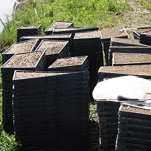 خمام - ارائه آموزش عملی تهیه و آمادهسازی نشاء باکسی در روستای فتاتو