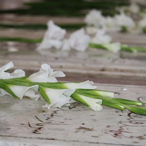 خمام - گلزار شهدای خمام عطر افشانی و گلباران شد