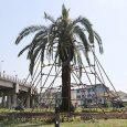 جابجایی و کاشت مجدد درخت فونیکس در فضای سبز پل غیرهمسطح