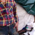 عدم چاره اندیشی برای کارتن خواب خمامی موجب شده به داشتن سرپناهی در محل انباشت زبالهها رضایت دهد!