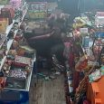 دومین ضارب متواری در نزاع چاپارخانه دستگیر شد