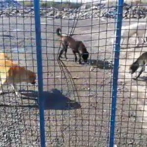 خمام - به وضعیت سگهای خیابانی رسیدگی شود
