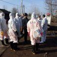 آمار ارائه شده از سوی اداره محیط زیست نادرست بوده و ۵۳۰ قطعه مرغ خانگی مبتلا به آنفلوانزا در مرزدشت معدوم شده است