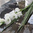 نثار گل به مزار معلمان شهید بخش خمام