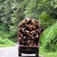 ۱,۵ تن چوب قاچاق در خمام کشف شد