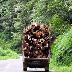 خمام - ۱,۵ تن چوب قاچاق در خمام کشف شد