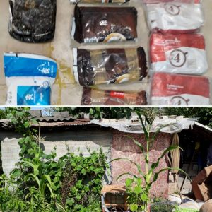 خمام - ۱۲ کیلوگرم ماده مخدر حشیش در خمام کشف و ضبط شد
