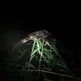 پیدا شدن جسد فردی ناشناس در روستای تیسیه