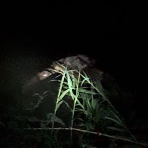 خمام - پیدا شدن جسد فردی ناشناس در روستای تیسیه
