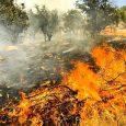 وقوع ۷ مورد آتشسوزی در بخش خمام به دلیل وزش باد گرم