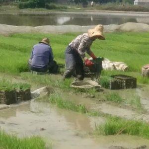 خمام - رنج و برنج ؛ دو واژهی درهم تنیده …