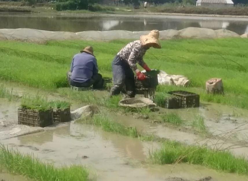 رنج و برنج ؛ دو واژهی درهم تنیده …