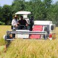 اولین برداشت مکانیزه برنج شهرستان رشت در جیرسر چوکام صورت پذیرفت