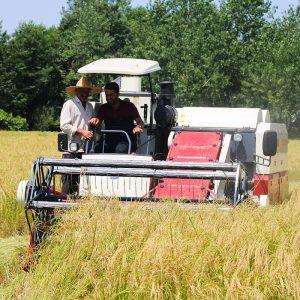 خمام - اولین برداشت مکانیزه برنج شهرستان رشت در جیرسر چوکام صورت پذیرفت