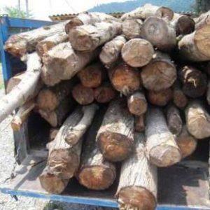 خمام - ۱ تن چوب جنگلی قاچاق در خمام کشف شد