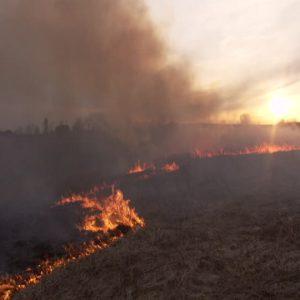 خمام - مهار ۱۱ فقره آتشسوزی در ۲۴ ساعت گذشته