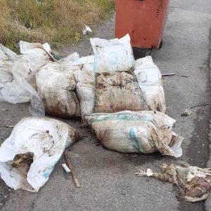 خمام - رهاسازی مرغهای مرده در محدوده شهری