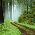 جنگل فتاتو بهعنوان اثر ملی طبیعی ثبت شد