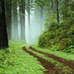 خمام - جنگل فتاتو بهعنوان اثر ملی طبیعی ثبت شد