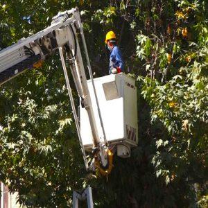 خمام - دهیاران شاخهزنی درختان در حریم شبکه برق را جدی بگیرند