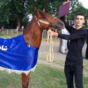 خمام - قهرمانی ماکان تقیخواه در مسابقات اسب سواری گیلان