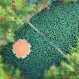 جلوه کمنظیر نیلوفرهای آبی در دهنهسر