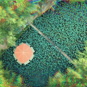 خمام - جلوه کمنظیر نیلوفرهای آبی در دهنهسر